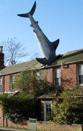 shark_big.jpg