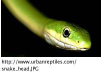 snake_head200.jpg