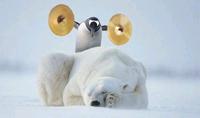 Ice Age Now