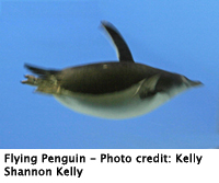 penguin_flying_200