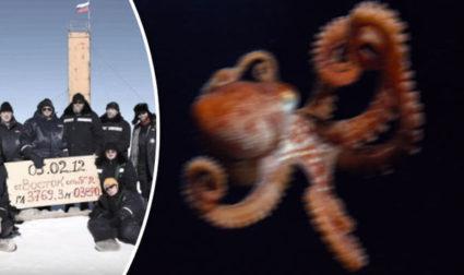 killer-octopus-putin-735175